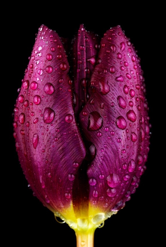 Cận cảnh các loài hoa đẹp lung linh ảnh 13