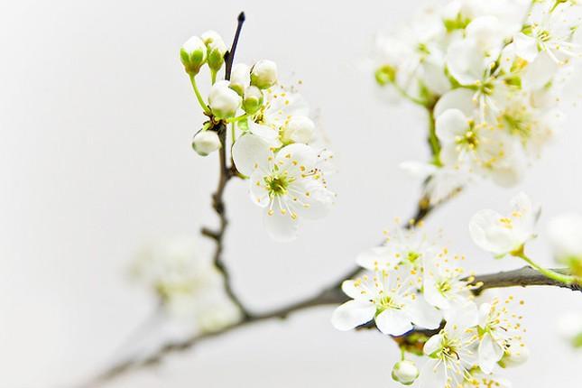 Vũ điệu của mùa xuân ảnh 1