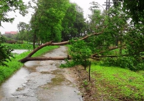 Cây đổ chắn ngang đường Nguyễn Lộ Trạch (TP Huế).