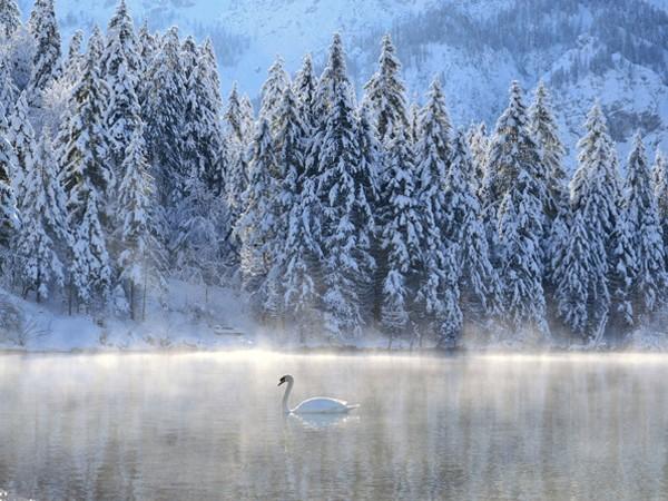 Truyện cổ tích mùa đông ảnh 1