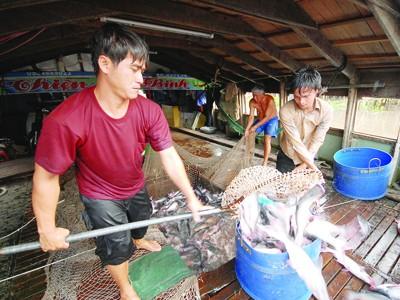 WWF Vietnam đồng ý đưa cá tra khỏi danh mục đỏ ảnh 1