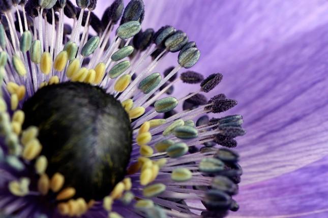 Cận cảnh các loài hoa đẹp lung linh ảnh 1