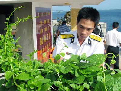 Trung úy Phùng Quyết Thắng, điểm B đảo Núi Le nâng niu chăm sóc chậu mồng tơi