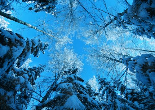 'Bà chúa tuyết' khoe nhan sắc yêu kiều ảnh 3
