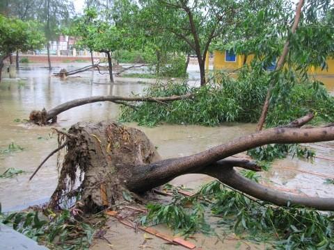 Cây xanh đổ la liệt trong khuôn viên trường học bị ngập lụt