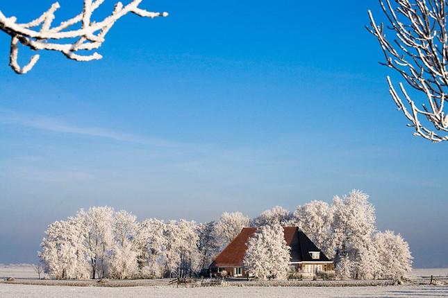 Truyện cổ tích mùa đông ảnh 3