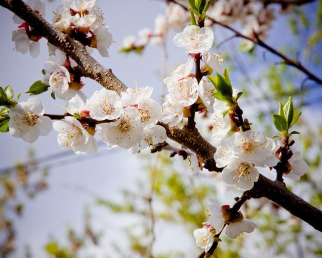 Vũ điệu của mùa xuân ảnh 4