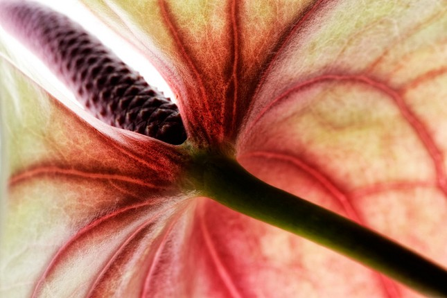 Cận cảnh các loài hoa đẹp lung linh ảnh 11