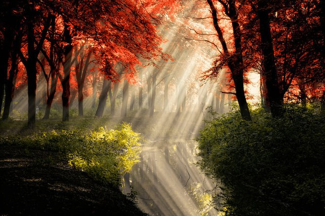 Khoảng khắc thanh bình của thiên nhiên ảnh 10