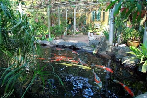 Bể cá vàng lớn trong góc vườn nay thiếu đi bàn tay chăm sóc của Đại tướng
