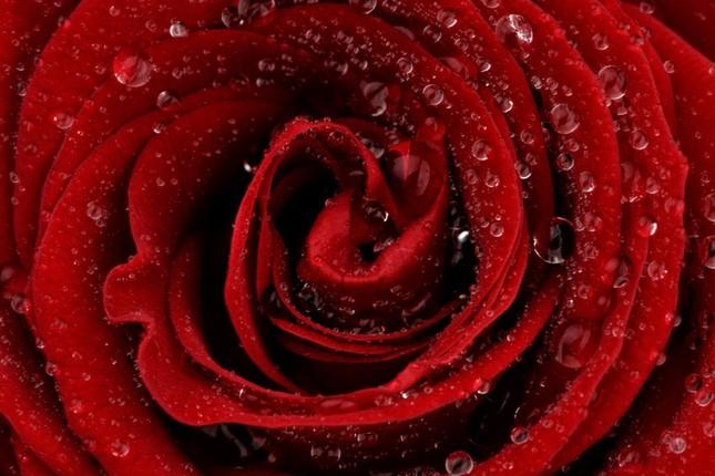 Cận cảnh các loài hoa đẹp lung linh ảnh 5