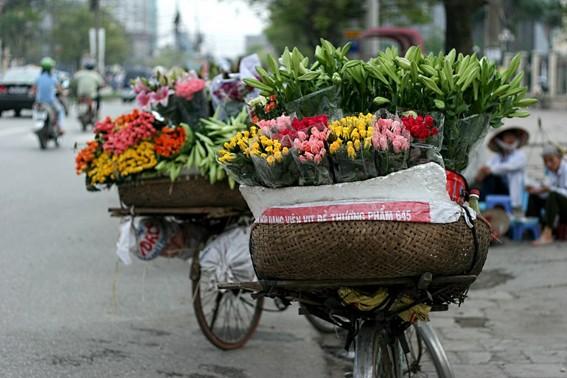 Loài hoa mang dấu ấn tình yêu Hà Nội ảnh 7