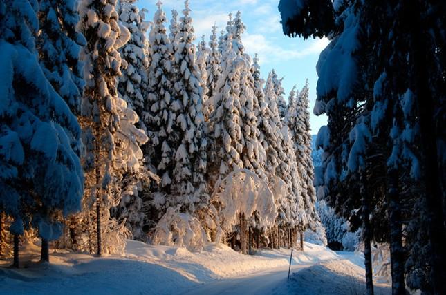 Truyện cổ tích mùa đông ảnh 8