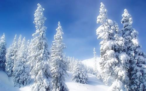 'Bà chúa tuyết' khoe nhan sắc yêu kiều ảnh 7