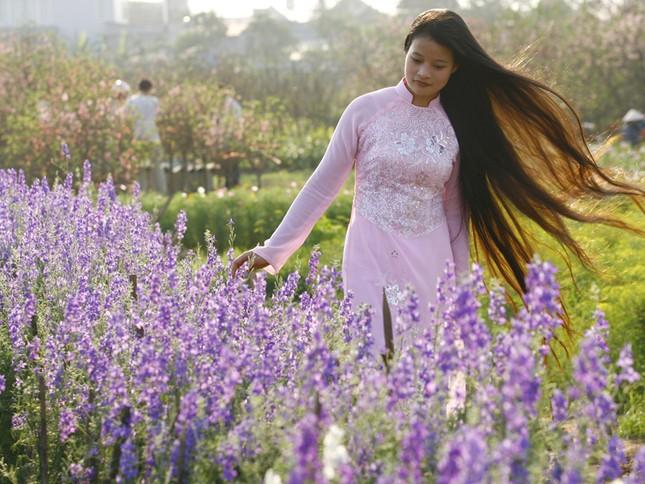 Vườn hoa Nhật Tân. Ảnh: Hồng Vĩnh
