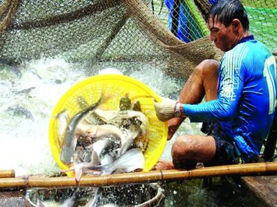 Tổng cục Thủy sản cho biết sẽ đối thoại với WWF về việc xếp cá tra vào danh mục đỏ