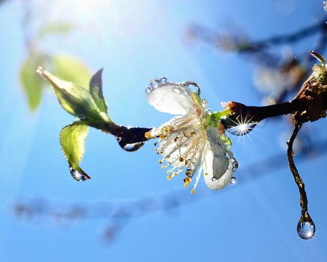 Vũ điệu của mùa xuân ảnh 2
