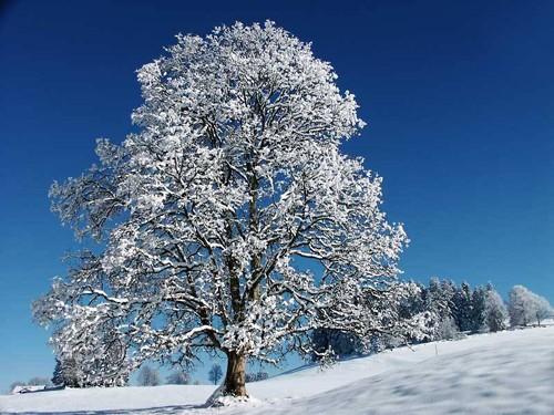 'Bà chúa tuyết' khoe nhan sắc yêu kiều ảnh 2
