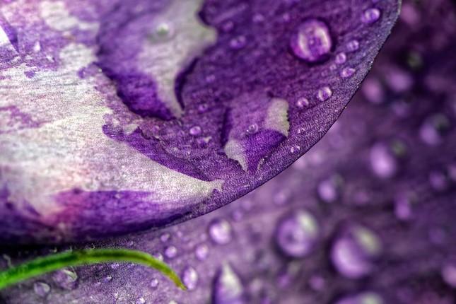 Cận cảnh các loài hoa đẹp lung linh ảnh 7