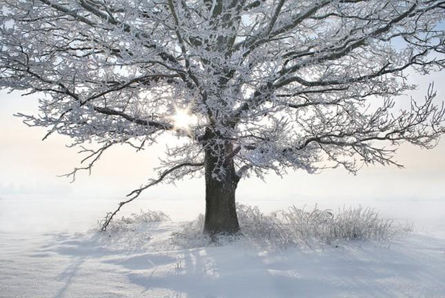 Truyện cổ tích mùa đông ảnh 2