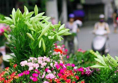 Loài hoa mang dấu ấn tình yêu Hà Nội ảnh 2