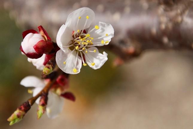 Vũ điệu của mùa xuân ảnh 3