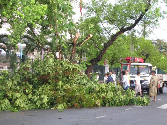 Công nhân Trung tâm Công viên Cây xanh Huế khẩn trương giải phóng cây cối gây ách tắc giao thông