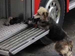 Amanda đặt các con lên xe cứu hỏa sau khi đưa chúng ra khỏi đám cháy. Nguồn: Internet