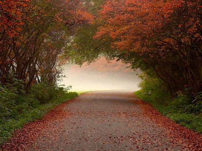 Khoảng khắc thanh bình của thiên nhiên ảnh 11
