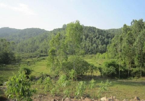 Khu vực đồi keo