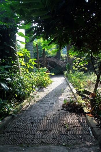 Sinh thời, 6 giờ sáng, Đại tướng dậy tập thể dục, đi theo những con đường nhỏ quanh khu vườn