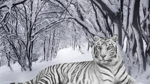'Bà chúa tuyết' khoe nhan sắc yêu kiều ảnh 5