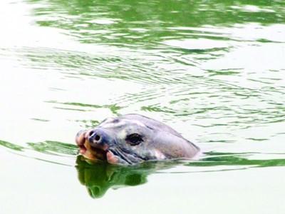 """""""Hãy để Hồ Gươm là nơi lưu trú cuối cùng cho cụ rùa"""", Tim McCormack"""