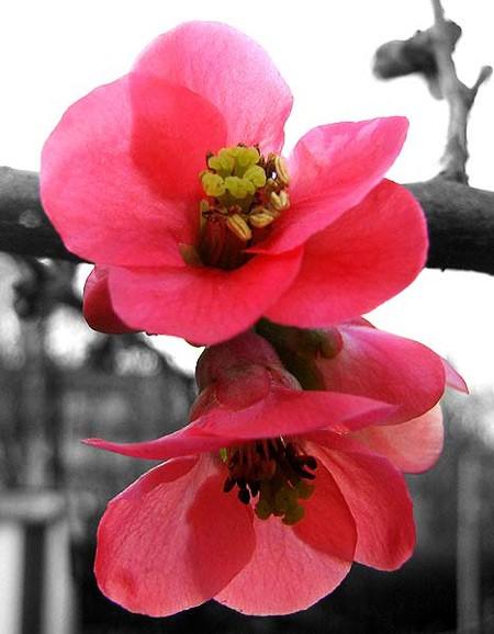 Vũ điệu của mùa xuân ảnh 7