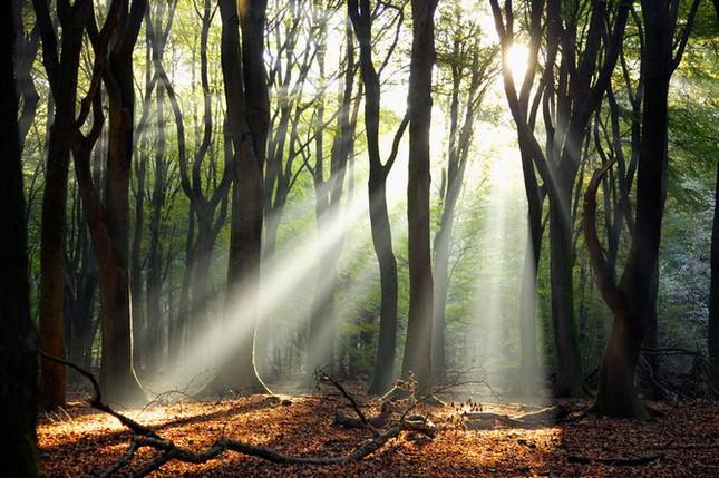Khoảng khắc thanh bình của thiên nhiên ảnh 14