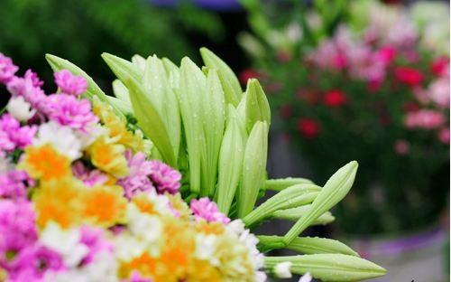 Loài hoa mang dấu ấn tình yêu Hà Nội ảnh 8