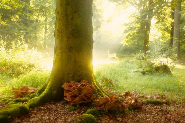 Khoảng khắc thanh bình của thiên nhiên ảnh 6