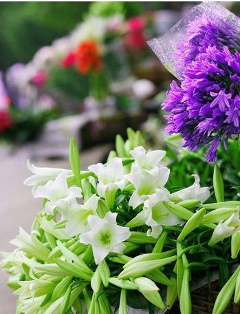Loài hoa mang dấu ấn tình yêu Hà Nội ảnh 10