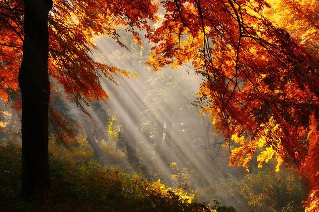 Khoảng khắc thanh bình của thiên nhiên ảnh 4