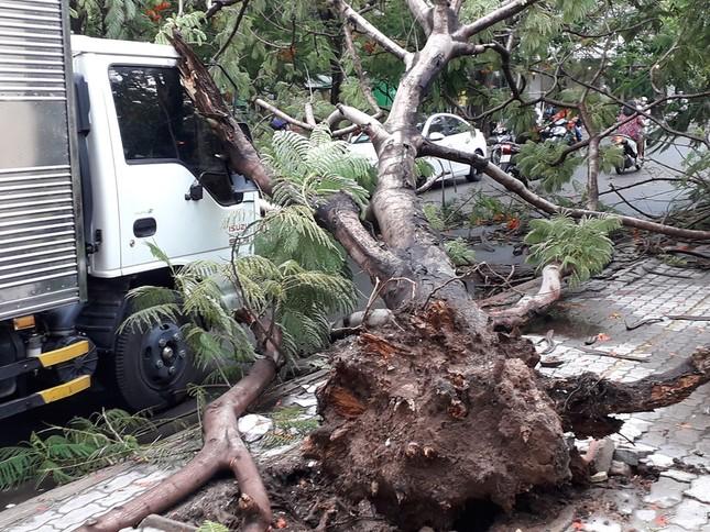 Lại đổ cây phượng vỹ cạnh Trường Đại học Văn hóa TPHCM ảnh 1