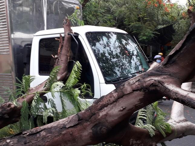 Lại đổ cây phượng vỹ cạnh Trường Đại học Văn hóa TPHCM ảnh 3