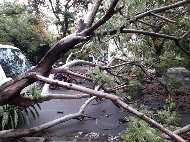 Lại đổ cây phượng vỹ cạnh Trường Đại học Văn hóa TPHCM ảnh 2