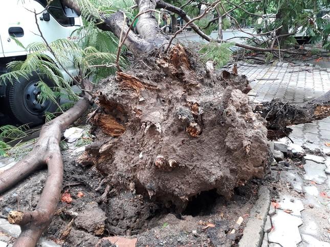 Lại đổ cây phượng vỹ cạnh Trường Đại học Văn hóa TPHCM ảnh 4