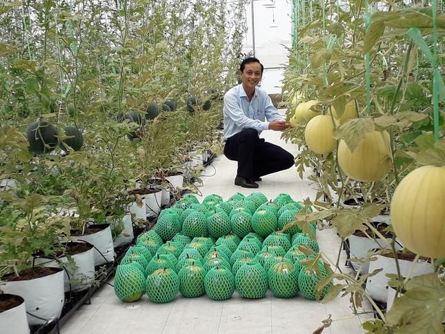 Sản xuất rau quả sạch trên bãi rác ở TPHCM ảnh 11