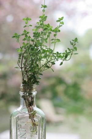 8 loại cây chữa bệnh bạn có thể trồng tại nhà ảnh 1
