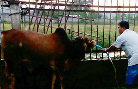 Đột nhập hai cơ sở bò bơm nước ở Đồng Nai ảnh 1