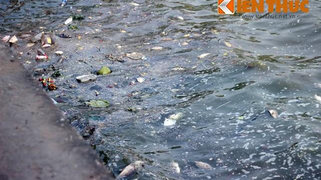 Cá chết hàng loạt, chất đống ở hồ Tây ảnh 1