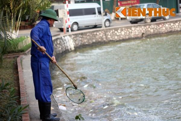 Cá chết hàng loạt, chất đống ở hồ Tây ảnh 3