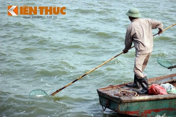 Cá chết hàng loạt, chất đống ở hồ Tây ảnh 4