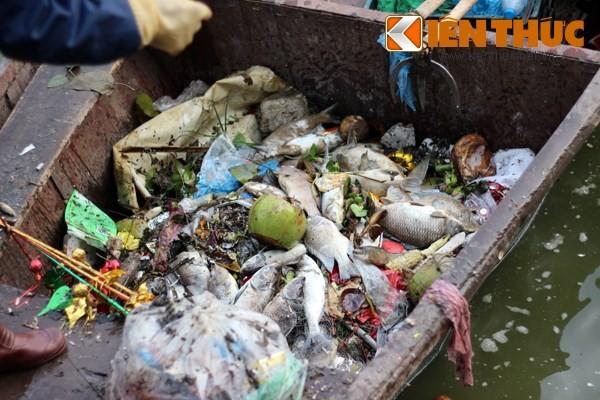 Cá chết hàng loạt, chất đống ở hồ Tây ảnh 5